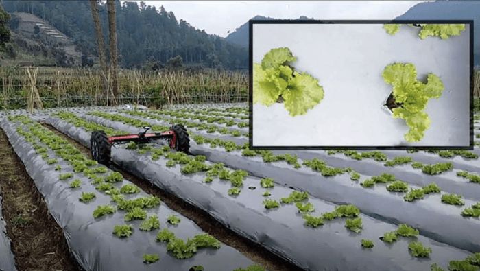 Detecting lettuce with di-wheel robot