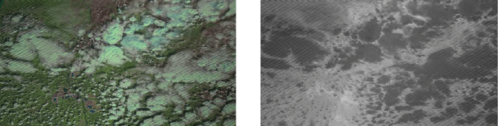 Satellite and thermal image of forest fire